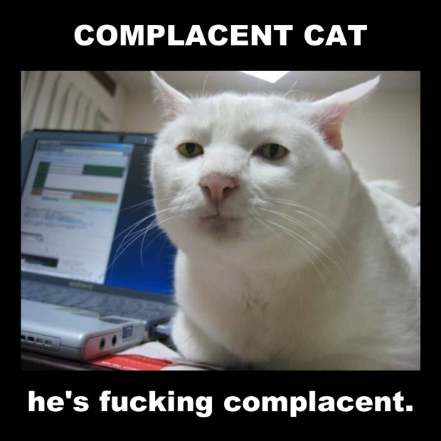 complacent cat