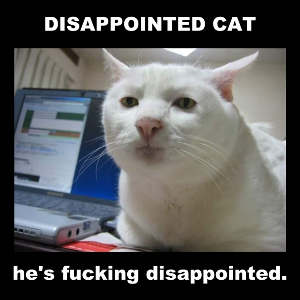 disappointed cat