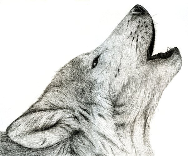 """wolf howling"", by taylor jones."