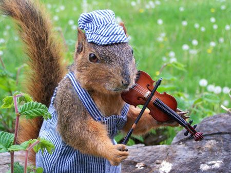 intense-squirrel-violinist